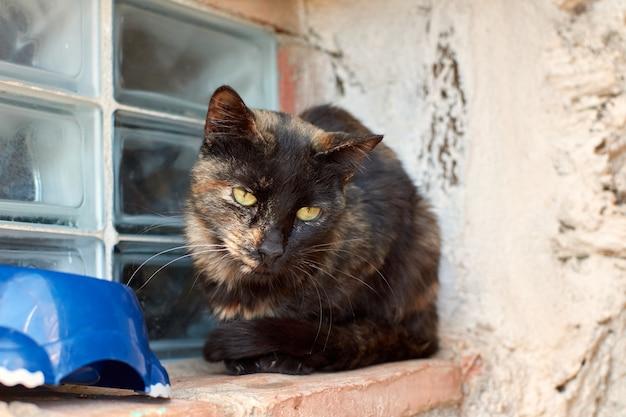 Een dakloze schildpadkat bij een raam die er verdrietig uitziet Premium Foto