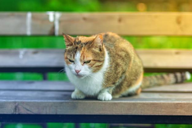 Een dakloze wit-rode kat zit op een bankje tegen een achtergrond van groen gras. Premium Foto