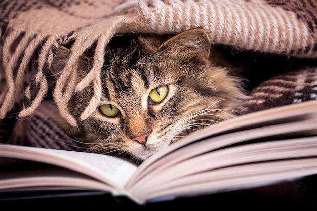 Een donzige gestreepte kat zit onder de wraps bij het boek. je favoriete boek lezen Premium Foto