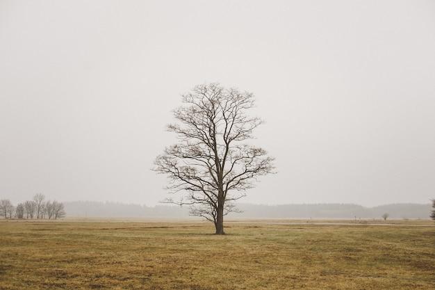 Een enkele eenzame boom in een veld in mistige veld en grijze lucht Gratis Foto