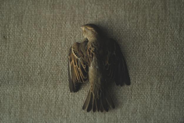 Een foto van een dode mus Gratis Foto