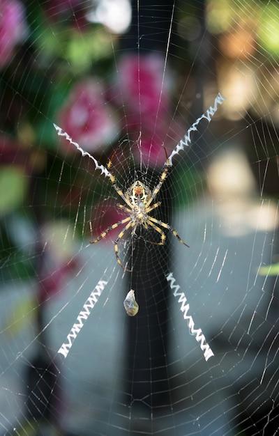 Een gele en zwarte spin grijpt en draait een cocon van zijde rond haar hommel Premium Foto