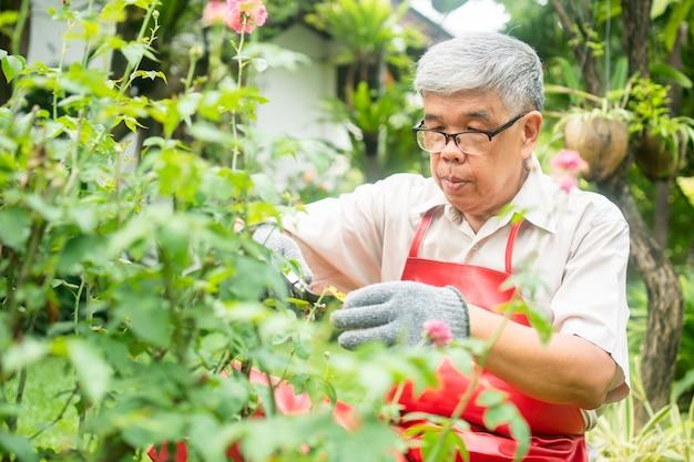 Een gelukkige en glimlachende aziatische oude bejaarde man snoeit takjes en bloemen voor een hobby na pensionering in een huis. concept van een gelukkige levensstijl en een goede gezondheid voor senioren. Premium Foto
