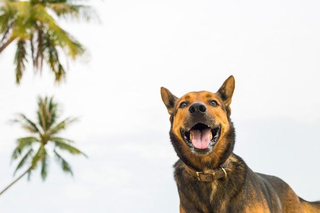 Een gelukkige hond op het strand. Premium Foto