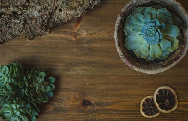 Een groene plant, cactustype succulente bloem in een pot Gratis Foto