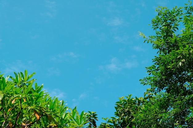 Een heldere hemel omringd door groene bladeren. op deze foto is ruimte voor beschrijving. Premium Foto