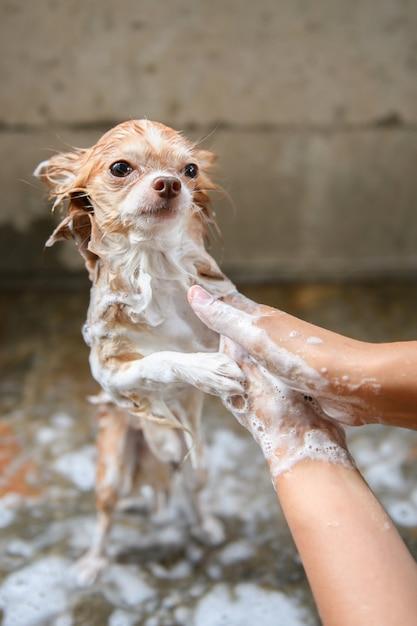 Een hond die een douche neemt met water en zeep, schoonmaakdienst Premium Foto