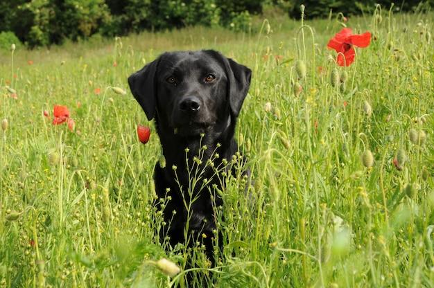 Een hond in een veld. Premium Foto
