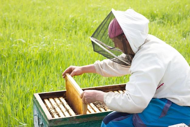 Een imker werkt om honing te verzamelen. bijenteelt concept. werk bij de bijenstal Premium Foto