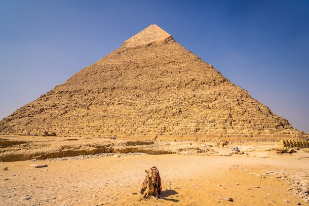 Een kameel zittend op de piramide van khafre. de piramides van gizeh zijn het oudste grafmonument ter wereld. in de stad caïro, egypte Premium Foto