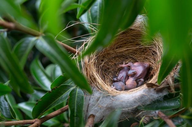 Een kleine vogel in het nest op een boom. | Gratis Foto