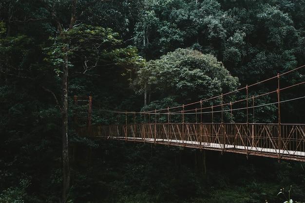 Een lange brug van de luifelgang in een bos Gratis Foto