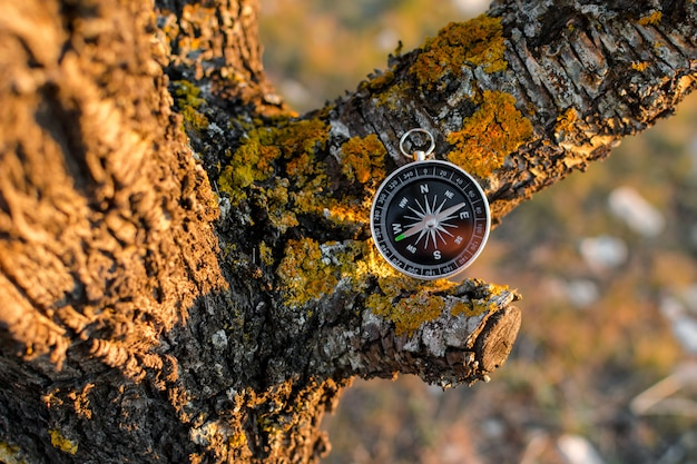 Een magnetisch kompas in een de herfstboom tegen. Premium Foto