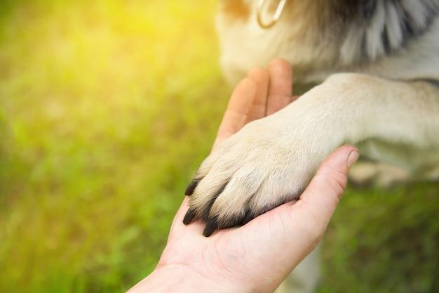 Een man houdt de poot van de hond in het park in de zomer bij zonsondergang. het concept van vriendschap, teamwerk, liefde Premium Foto