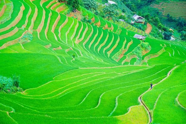 Een man loopt in het centrum prachtige terrasvormige rijstvelden en berglandschap in mu cang chai Premium Foto