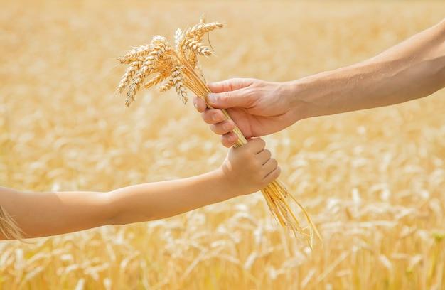 Een man met een kind houdt aartjes tarwe in zijn handen. Premium Foto