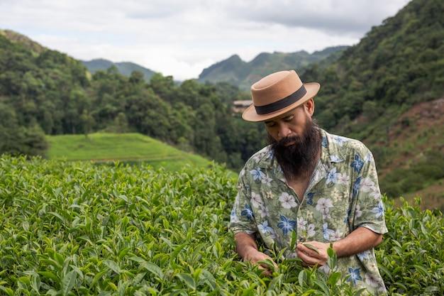 Een mannelijke boer met een baard controleert de thee op de boerderij. Gratis Foto