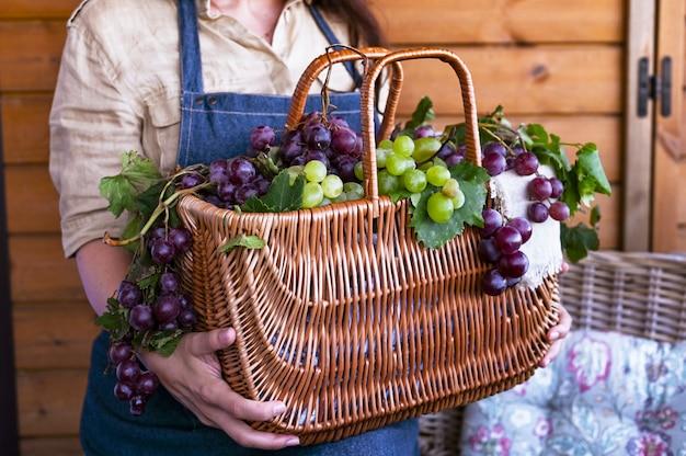 Een meisje met een mand oogst wijngaarden, verzamelt geselecteerde druiven in italië voor een grote herfstoogst. biologische, biologische voeding en fijne handgemaakte wijnen. Premium Foto