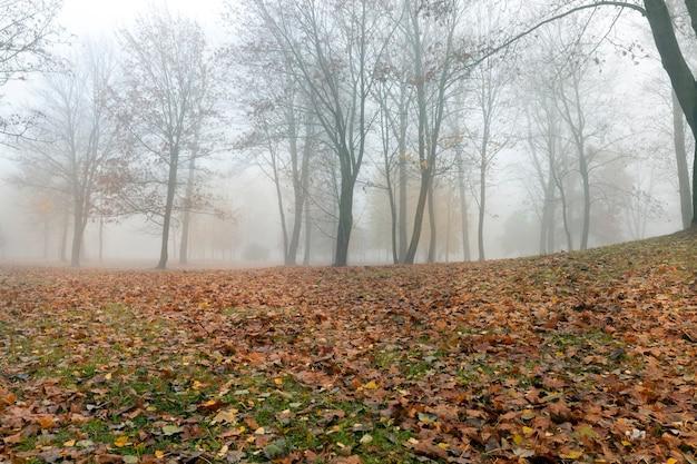 Een mistige ochtend in een herfstpark, loofbomen zonder loof en gevallen bladeren die op het groene gras liggen Premium Foto