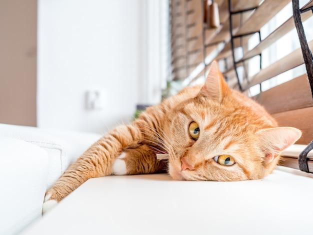 Een ontspannen huiskat bij het raam. Gratis Foto