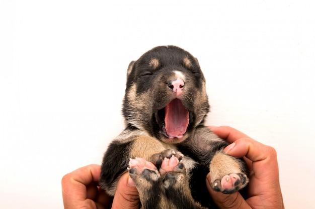 Een pasgeboren puppy op witte achtergrond bovenaanzicht Premium Foto
