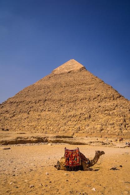 Een prachtige kameel zittend op de piramide van khafre. de piramides van gizeh zijn het oudste grafmonument ter wereld. in de stad caïro, egypte Premium Foto
