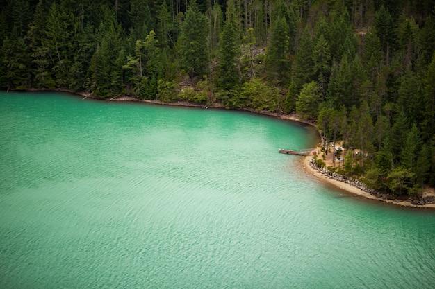 Een prachtige kust naast een dicht bos Gratis Foto