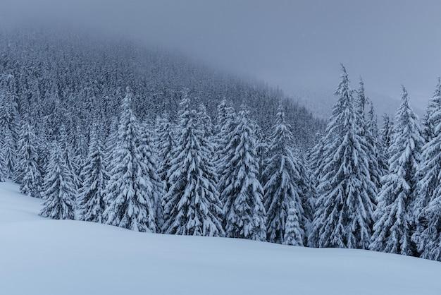 Een rustig winters tafereel. sparren bedekt met sneeuw staan in een mist. Gratis Foto