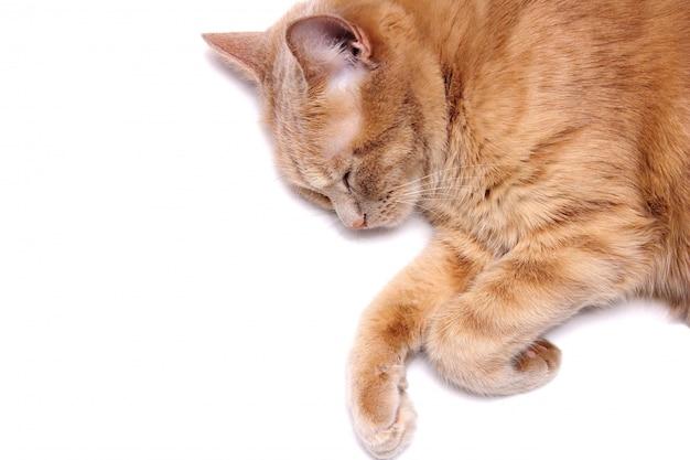 Een slapende rode kat is geïsoleerd op een witte achtergrond. detailopname. Premium Foto