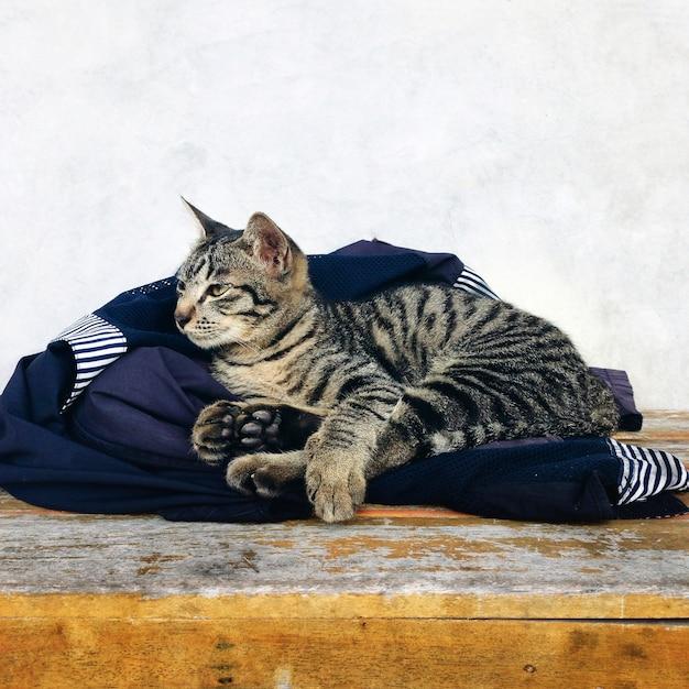 Een slaperige kat Gratis Foto