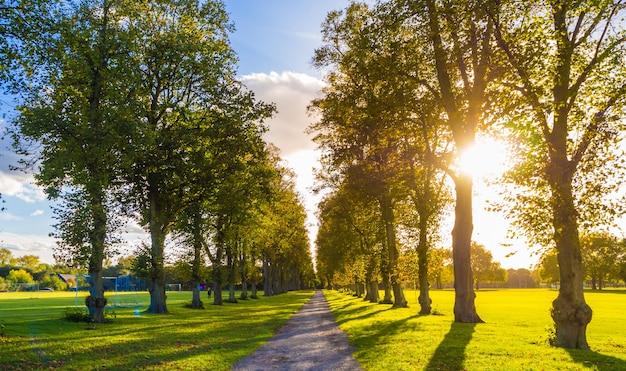 Een smalle weg omgeven door groene bomen in windsor, engeland Gratis Foto