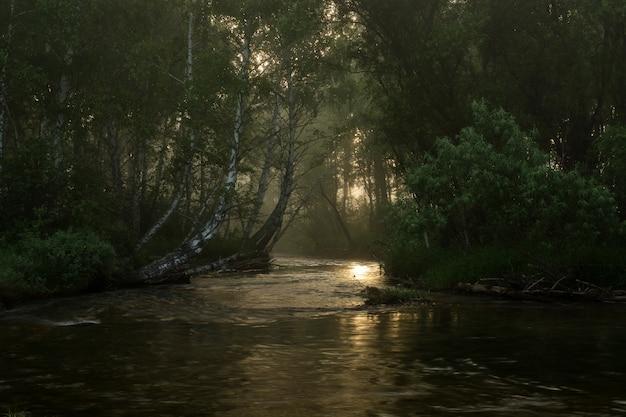 Een snelle bergrivier stroomt tussen bomen. logt op de kust. felled bomen in het water. Premium Foto