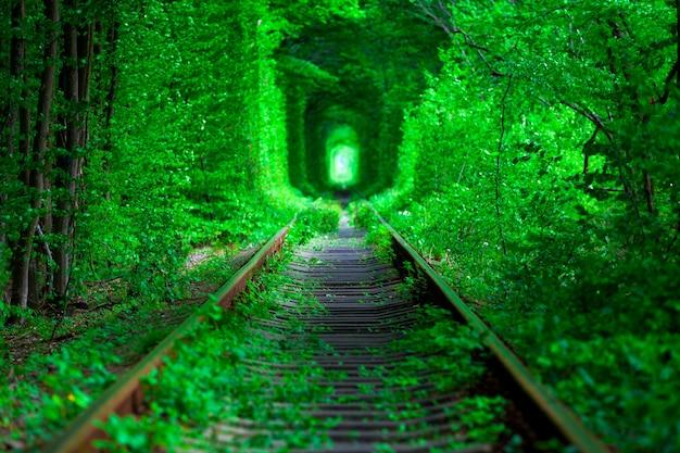 Een spoorweg in de lente bostunnel van liefde Premium Foto
