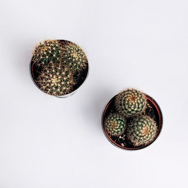 Een verhoogde weergave van cactus pot planten op witte achtergrond Gratis Foto