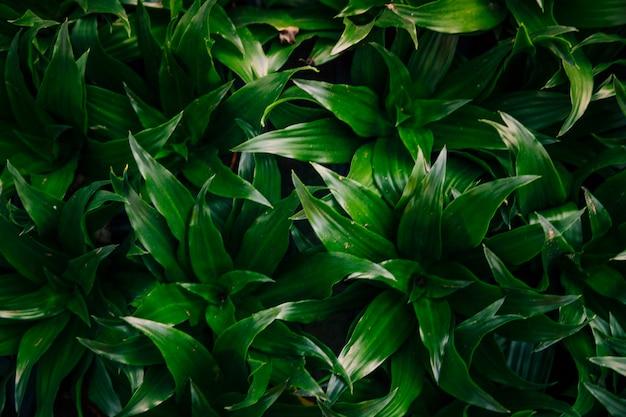 Een verhoogde weergave van groene bladeren achtergrond Gratis Foto