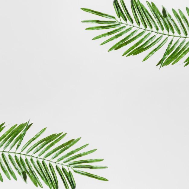 Een verhoogde weergave van groene bladeren geïsoleerd op een witte achtergrond Gratis Foto