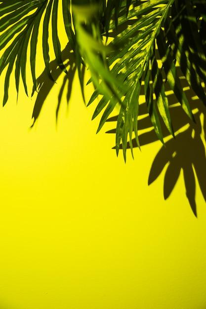 Een verhoogde weergave van groene palmbladeren op heldere gele achtergrond Gratis Foto