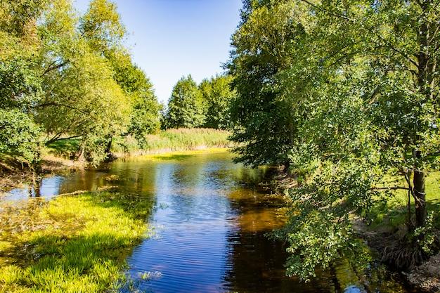 Een vijver tussen groene bomen. Premium Foto
