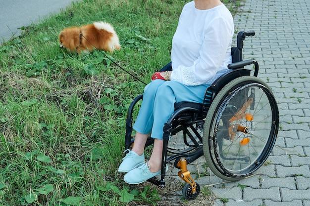 Een vrouw in een rolstoel loopt met haar hond buiten. internationale dag van mensen met een handicap Premium Foto