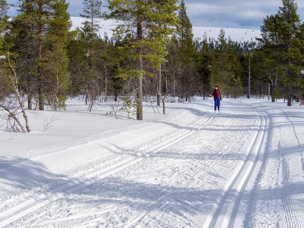Een vrouwelijke skiër in het hele land in het bos van finland Premium Foto