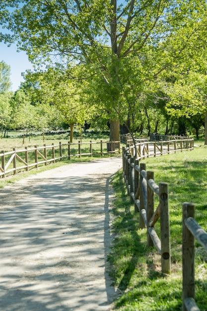 Een weg door een klein bos groen eenzaam Premium Foto