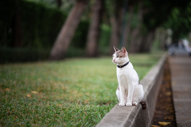 Een wit met bruine streepkat bevindt zich op de weg in de tuin. Premium Foto