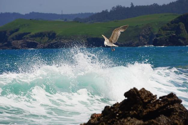 Een zeemeeuw die aan de kust vist Gratis Foto