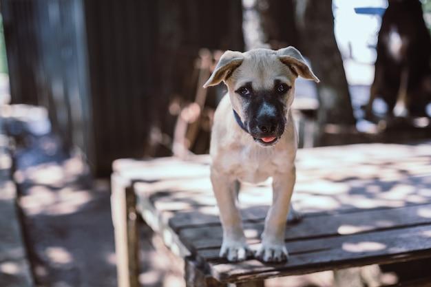 Een zwerfhond, alleen leven wachtend op eten. de verlaten dakloze verdwaalde hond ligt in de straat. weinig droevige verlaten hond op voetpad. Premium Foto
