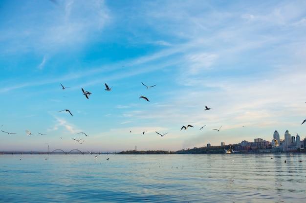 Een zwerm meeuwen aan de oevers van de stadsrivier. Premium Foto
