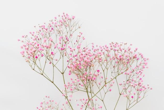 Eenvoudige roze bloemtakjes Gratis Foto