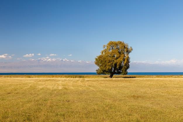 Eenzame boom aan het issyk-kul-meer, boom aan het meer Premium Foto