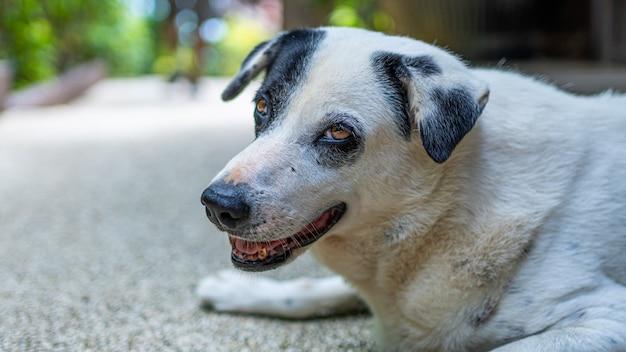Eenzame hond op de vloer Premium Foto