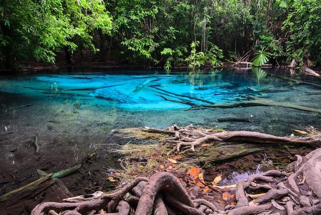 Emerald blue pool (sra morakot) in de provincie krabi, thailand Premium Foto
