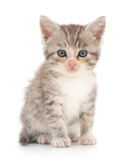 En katje dat geïsoleerd stelt kijkt Premium Foto